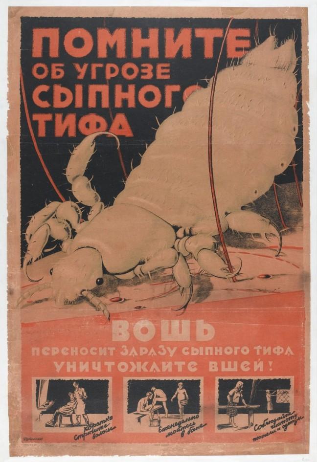 Typhus Louse Poster